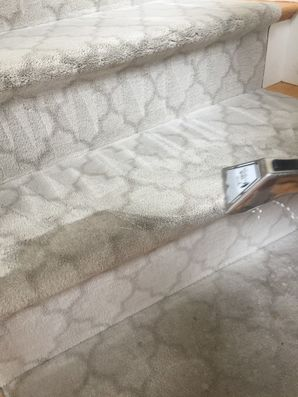 Carpet Cleaning in Reading, MA (1)